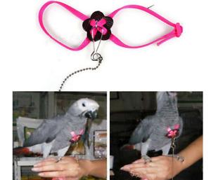 Piccolo Pet Guinzaglio Uccello Pappagallo Regolabile Pettorina Flying Formazione