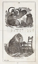 """""""HISTORY OF THE EARTH"""" by Goldsmith -1810- MONKEYS & THE MANDRIL"""