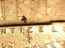 "*Retained Lamination Mint Error:1943-P Jefferson Nickel (Silver)""RARE"""