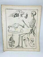 Antique large print HC 1843.Oken's Naturgeschichte Plate 2 Skeleton Anatomy