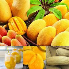2 Pcs/bag Mango Seeds Mini Mango Tree Seeds Bonsai Tree Seed Organic Fruits hot