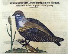 1669 SPARROWS - GESNER FOLIO - 4 original WOODCUTS handcolored