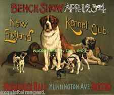 1890 New England Kennel Club Dog Show~St. Bernard, Mastiff, etc.New Note Cards
