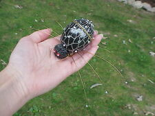 Hand Decorated REAL Goose/Duck Egg Trinket Box Halloween Spider Decoration
