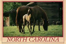 Horses in North Carolina, The Tar Heel State, Mare, Foal Horse - Animal Postcard