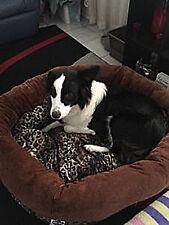 Donut Shaped Dog and Cat Bed Super Warm , Pet Cushion,  90cm diameter - Leopard