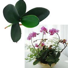 PU Phalaenopsis Leaves Artificial Plant Foliage Decor Flower Auxiliary Beauty