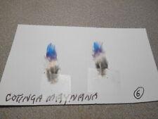 6 Cotinga Maynana feathers. classic salmon flies. large. Vg color.