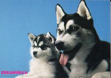 Polarhund * Schlittenhund * Husky * Malamute * DOG * Postkarte  Postcard  # 30