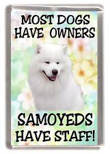 "Samoyed Dog Fridge Magnet ""Most Dogs .....Samoyeds Have Staff!"" by Starprint"