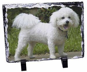 Bichon Frise Dog Photo Slate Christmas Gift Ornament, AD-BF2SL