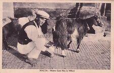 MALTA - Goat Milker Man