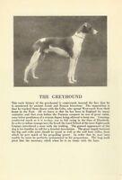 Greyhound - 1931 Vintage Dog Print - MATTED
