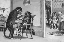 Print.  1902.  Chimpanzee Dentist - Cat Patients