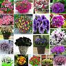 200 seeds of Petunia flowers pink red purple yellow white grandiflora multiflora