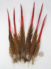 Pheasant Tail Feathers, Red TIPS XL 10-12 inch, per 6 from Lamplight Feather