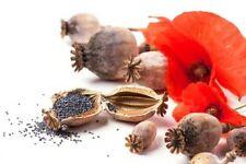 ***10 ml Opium-Parfümöl, sinnlich - orientalisch