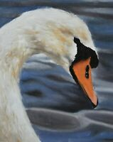 James Coates Original Oil Painting - Portrait Of A Swan (British Wildlife Art)