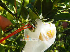 10pcs Fruit Fly Exclusion Mesh Bags, Protection Bags 25x15cm EASY INSTALL