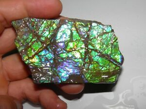 Rare Quality Rough Canadian Ammolite  Alberta Quality Colours 69 Grm Only One !