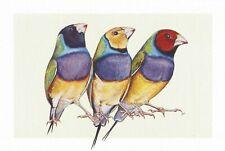 "Postcard Jane Kim ""Gouldian Finches"" 2018 Cornell Lab of Ornithology MINT"