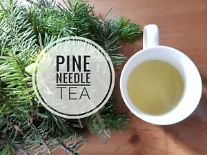 Pine Needle Tea, all natural Canadian pine needles. Fresh and organic!