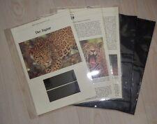 XE WWF-capítulo para el alojamiento V. marcas, mapas, entre FDC 's, sin marcas, mapas, FDC