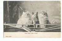 Postcard Cats sitting by the Fire 'And Bitter Cold it was' PM 1903      (A25)