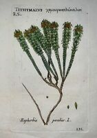 1598 [1796] Richer de BELLEVAL - EUPHORBIA - hand col copper engraving