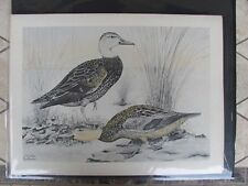 Original  Rex Brasher #134,134a  Hand Colored  Print Florida Duck  #134aREX2 DSS