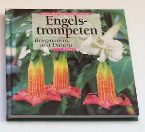 Engelstrompeten Brugmansia und Datura von Ulrike Preißel