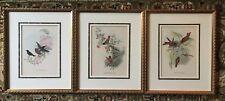 1940's - John Gould - Lithograph of Birds - Framed - Set Of 3 Prints