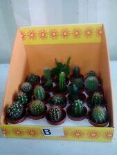 FULL TRAY 20 x Mixed Cacti/Cactus Plants (5.5cm Pots) - Cacti Assorted Varieties