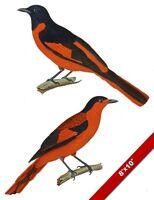 PERICROCOTUS MINIATUS BIRD AVIARY DRAWING FINE ART REAL CANVAS GICLEE 8X10PRINT