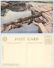 Alligators in Pool New York Zoological Park Animal Postcard