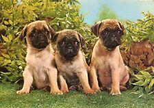 Alte Postkarte - Drei niedliche Hunde