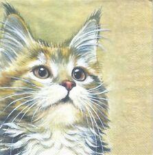 1 Lunch Papier Serviette Napkin (BP669) niedliche Katze schaut