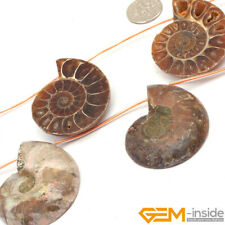 Natural Conch Fossil Gemstone Loose Beads For Jewelry Making 7 Pcs 25-30mm