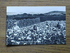 Photo PC of workers in ARUM field in Scilly Isles