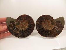 S.V.F - Madagascan Ammonite Cut pair - 12.3 cm - Large - Free Stands