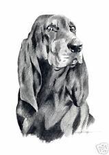 Black And Tan Coonhound Dog Drawing Art 11 X 14 Djr