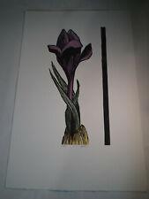 Iris by Leonard Baskin  Flower Proof