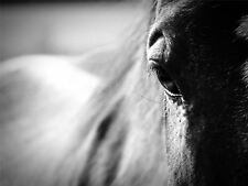 ART PRINT POSTER PHOTO ANIMAL HORSE HEAD FLANK EYE LFMP0461