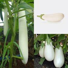 Rare Seeds White Eggplant Aysberg - Iceberg Organic Heirloom Vegetable Seed