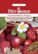 Dürr Monatserdbeeren Rügen Samen