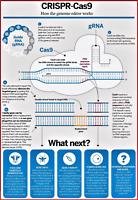 "CRISPR - REPRINT 13"" x 19"" POSTER - VISUALIZE THE POSSIBILITIES"