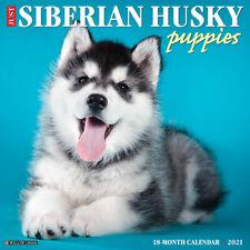 Just Siberian Husky Pups (dog breed calendar) 2021 Wall Calendar (Free Shipping)
