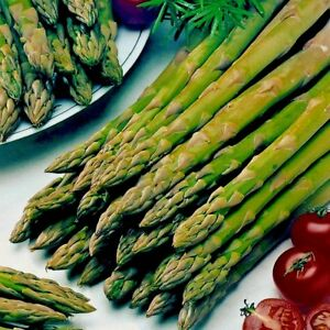 Vegetable Asparagus Connovers Colossal Appx 250 seeds