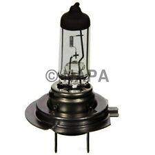Headlight Bulb-4 Door, Sedan NAPA/LAMPS-LMP 1255H7