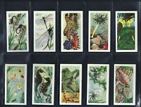 AMALGAMATED - A NATURE SERIES - FULL SET OF 25 CARDS